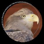 motyw1pcep_ptaki